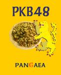 rabel_PKB48.jpg